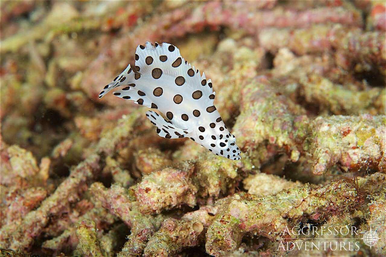 Indonesien Unterwasser