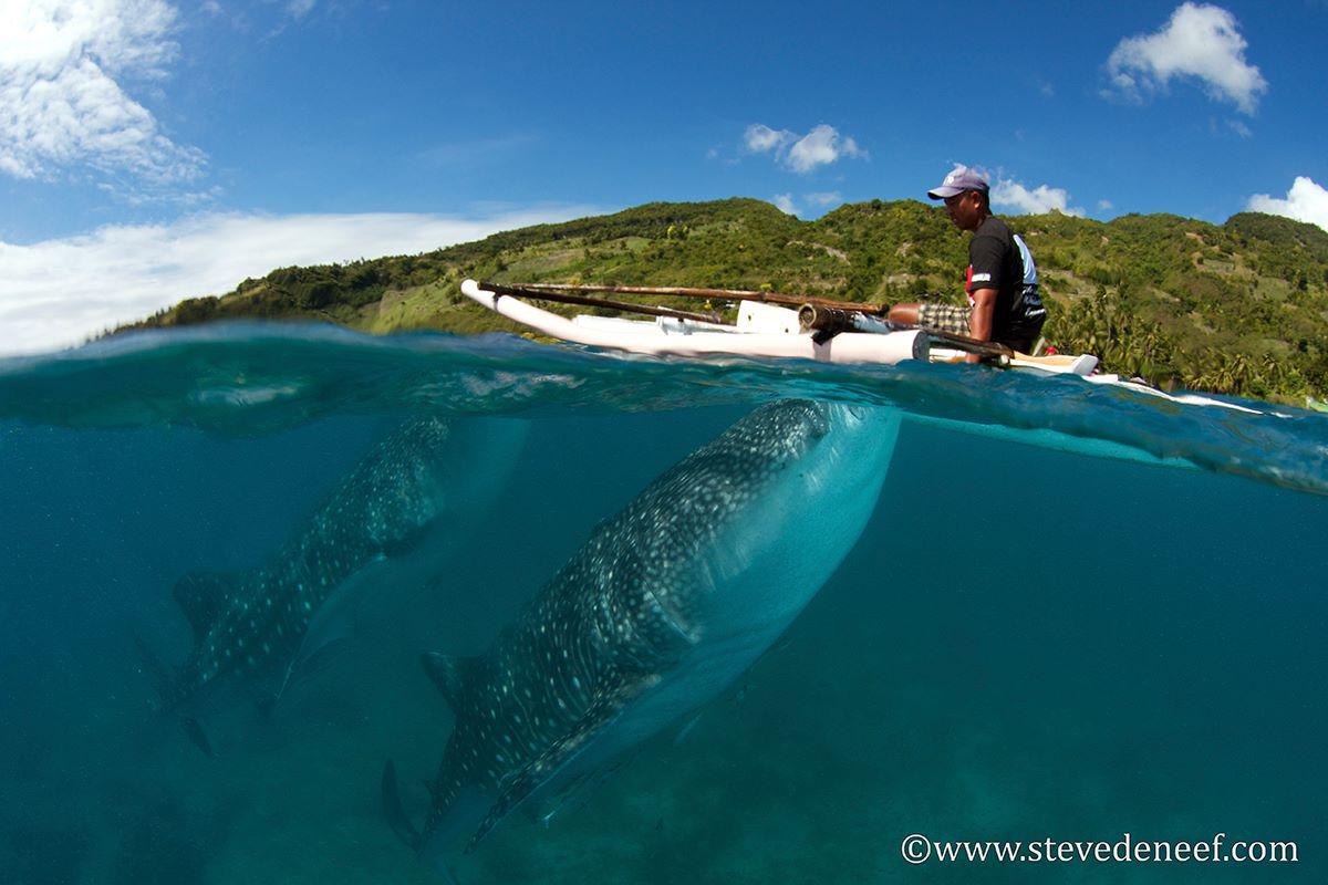 Philippinen Walhai