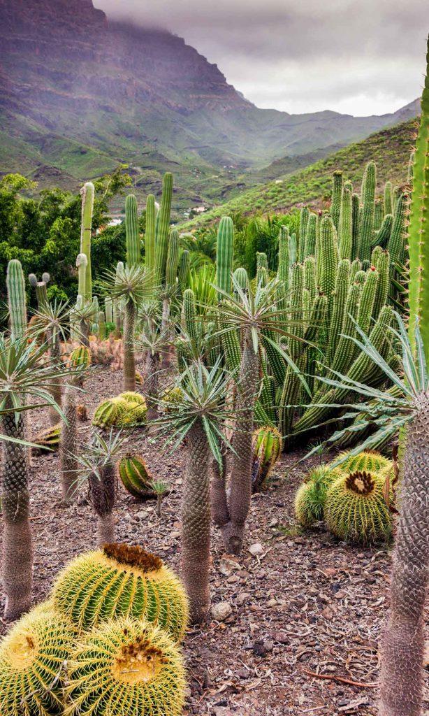 Slow Dive Atlantik Kanarische Inseln Kaktus