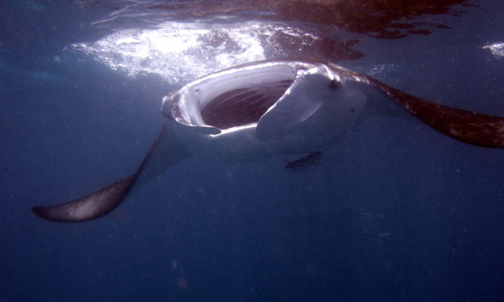 Slow Dive Indischer Ozean Malediven Euro Divers Kurumba Manta