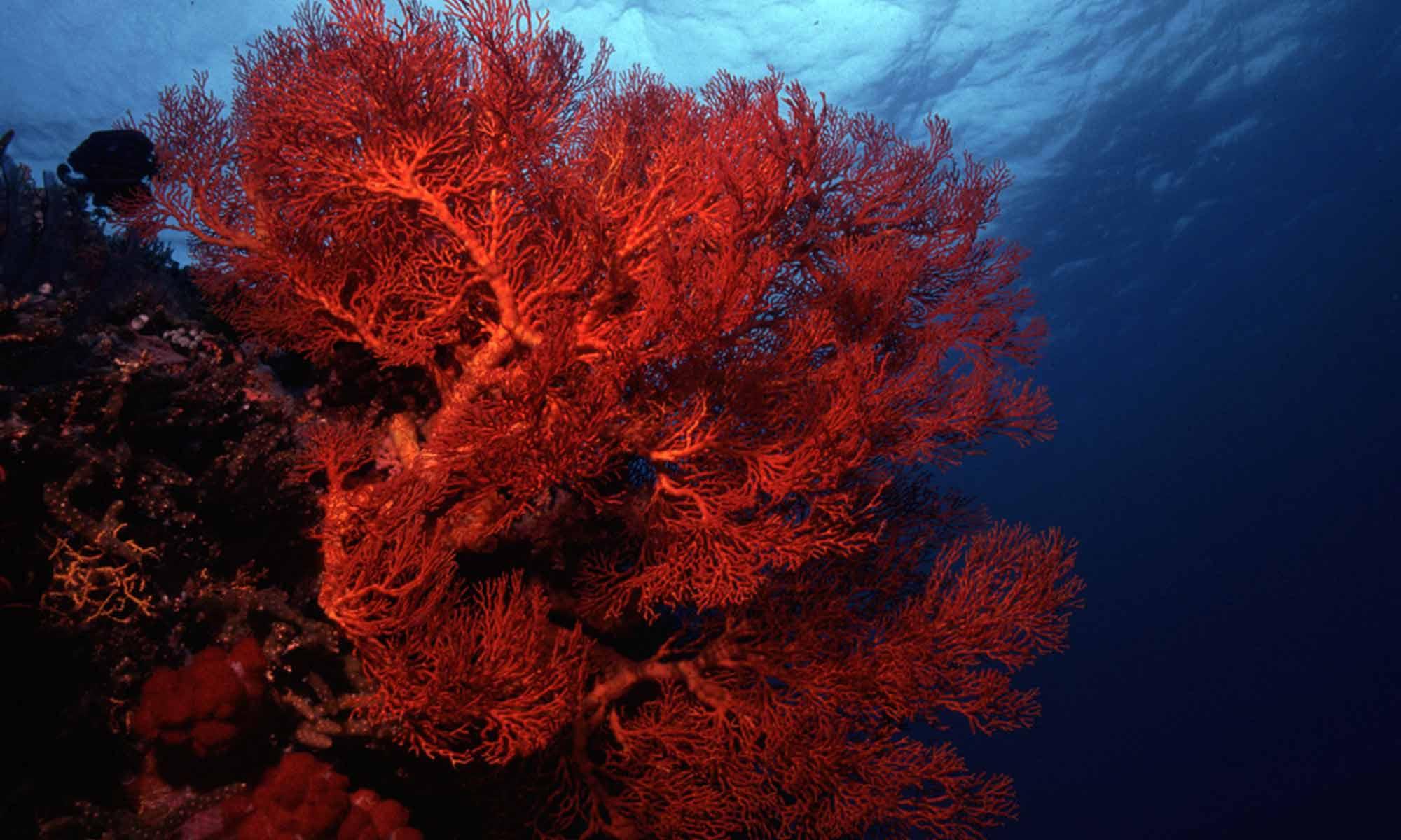 Slow Dive Indischer Ozean Malediven Euro Divers Vilamendhoo Korallen