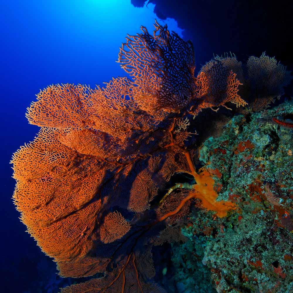 Slow Dive Indischer Ozean Malediven Koralle