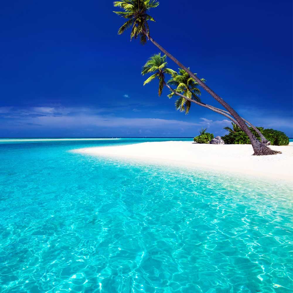 Slow Dive Indischer Ozean Malediven Palme