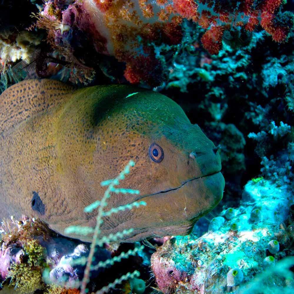 Slow Dive Indopazifik Indonesien Moräne