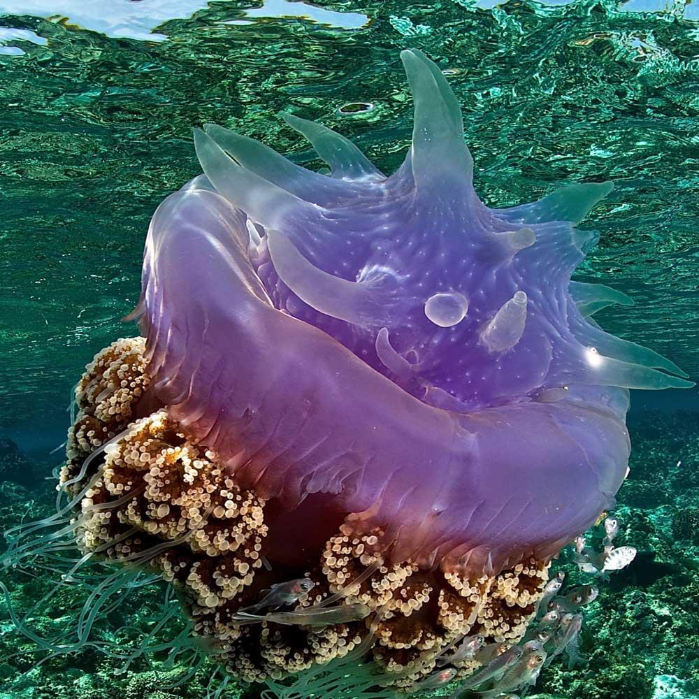 Slow Dive Indopazifik Philippinen Unterwasser 2