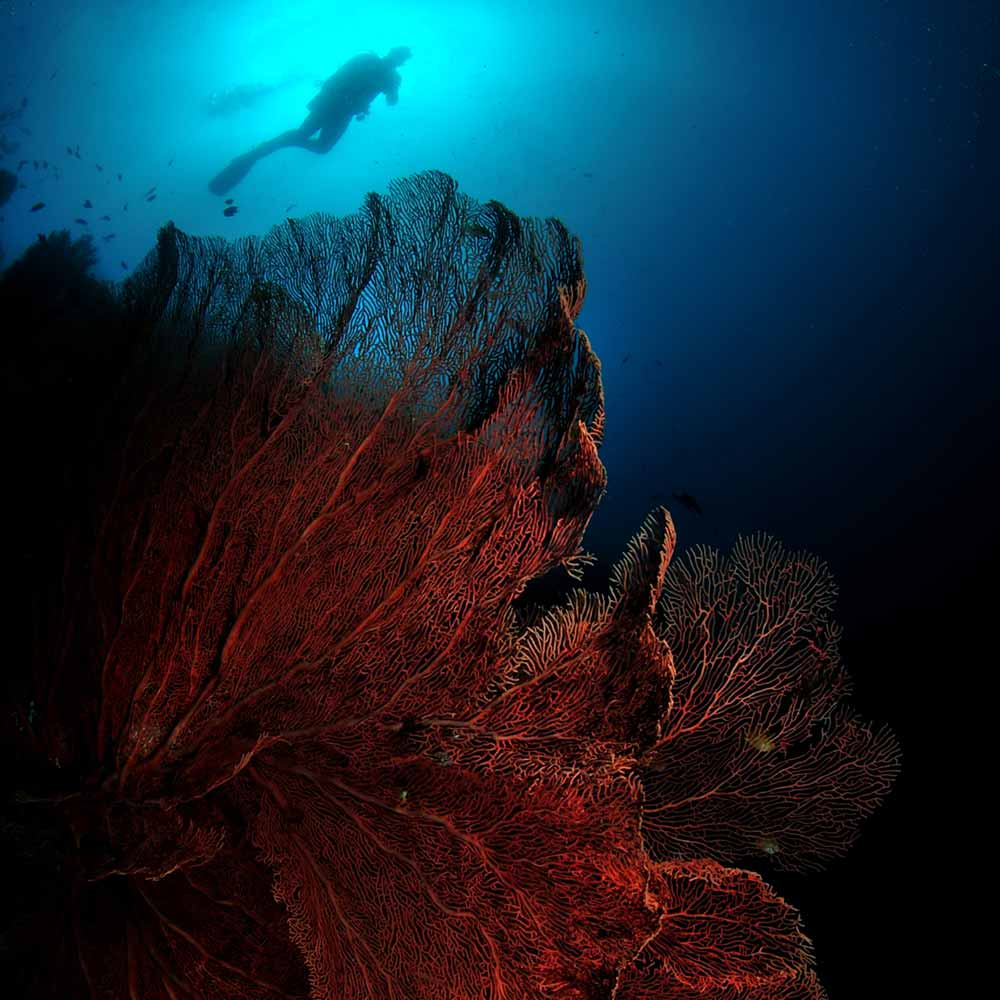 Slow Dive Indopazifik Philippinen Unterwasserwelt