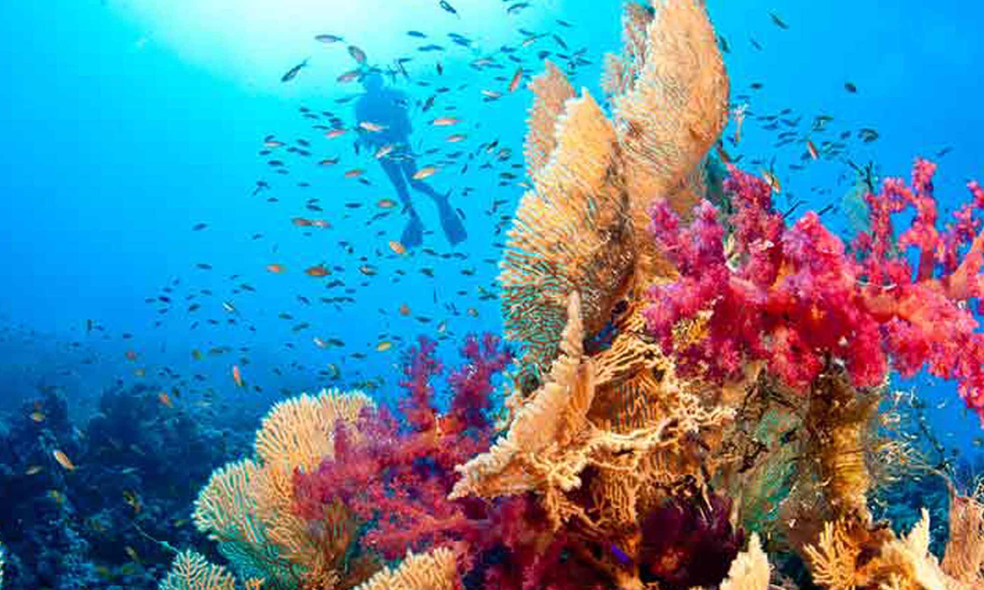 Slow Dive Rotes Meer Ägypten Camel Dive Club Unterwasser