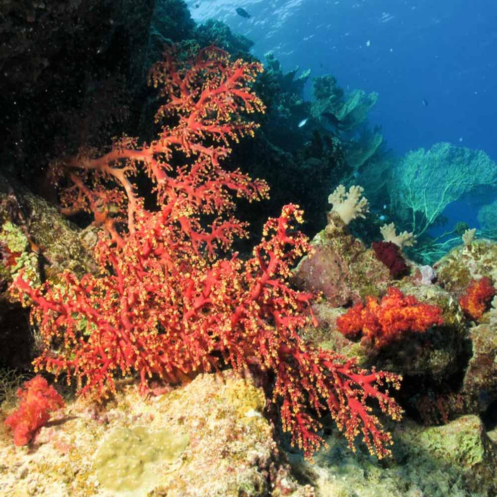 Slow Dive Rotes Meer Ägypten Koralle