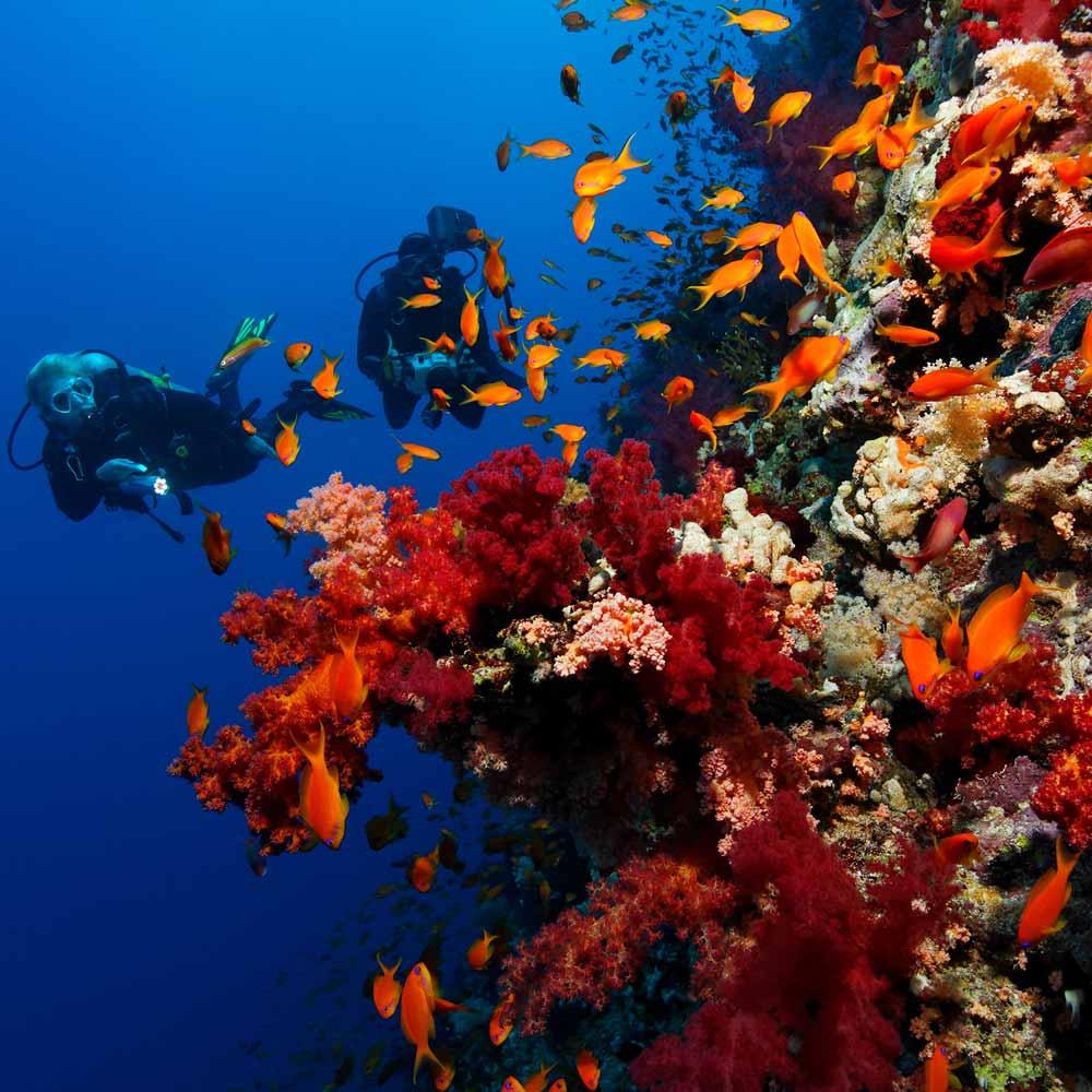 Slow Dive Rotes Meer Ägypten graue Korallen