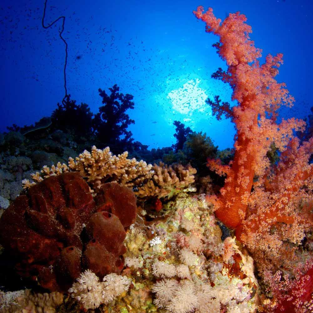 Slow Dive Rotes Meer Ägypten Korallengarten