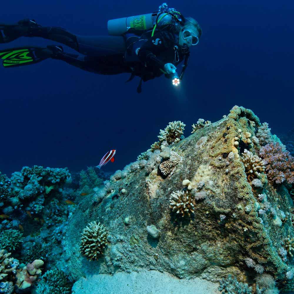 Slow Dive Rotes Meer Ägypten Taucher Sharm el Sheikh