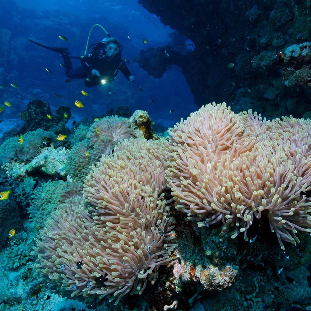 Slow Dive Rotes Meer Ägypten Taucher