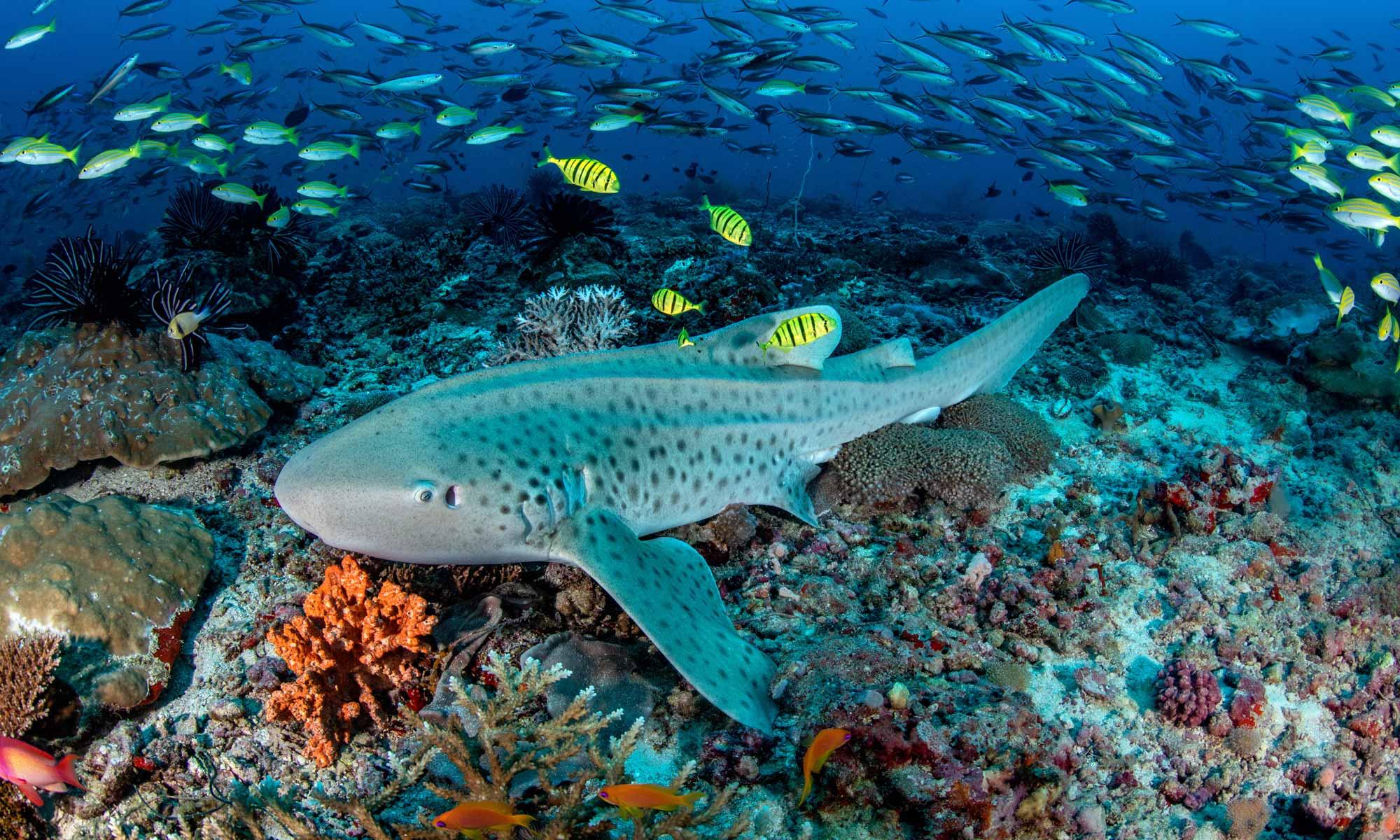 slow-dive-indischer-ozean-malediven-euro-divers-meeru-hai