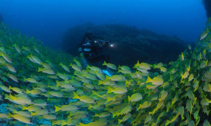 slow-dive-indischer-ozean-malediven-euro-divers-meeru-schwarm