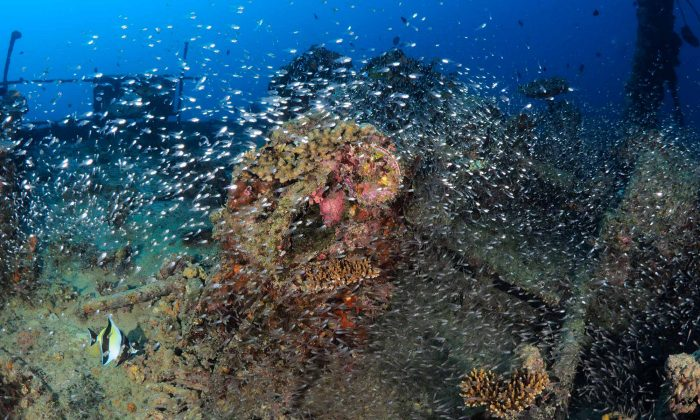 slow-dive-indischer-ozean-malediven-euro-divers-meeru-wrack