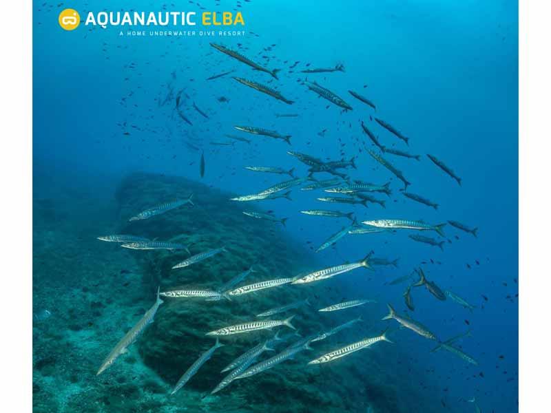 Slow Dive Angebote Italien Elba Unterwasser Fische