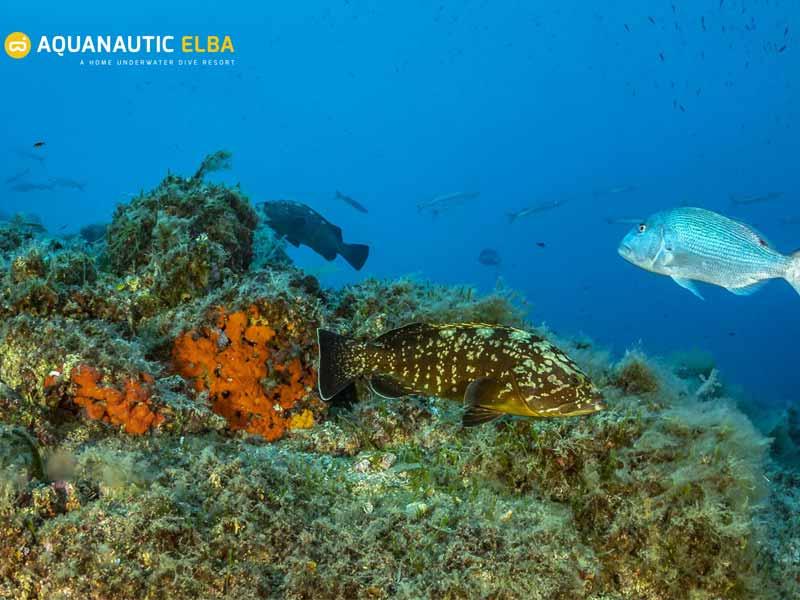 Slow Dive Angebote Italien Elba Unterwasser